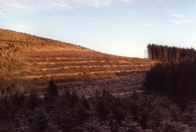 Contour felling in Clashindarroch Forest