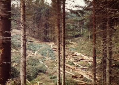 Organised Felling in Clashindarroch Forest